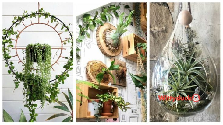 50 Creative Hanging Plants Ideas For