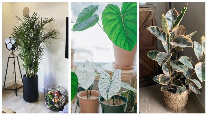 12 best plants for bedroom for better sleep  wittyduck